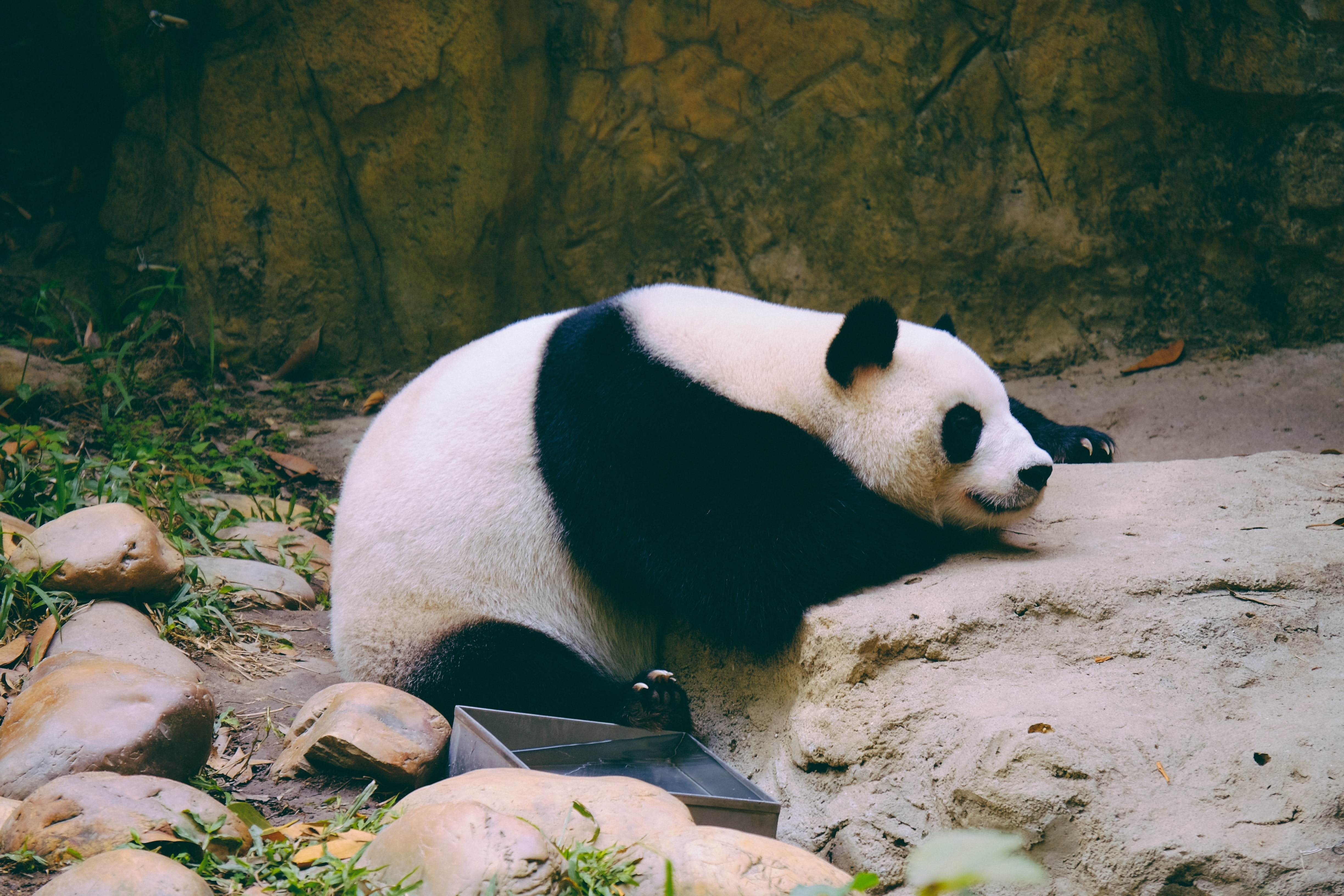 photo of a panda - China Tours